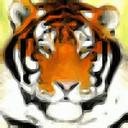 dynamicbox avatar